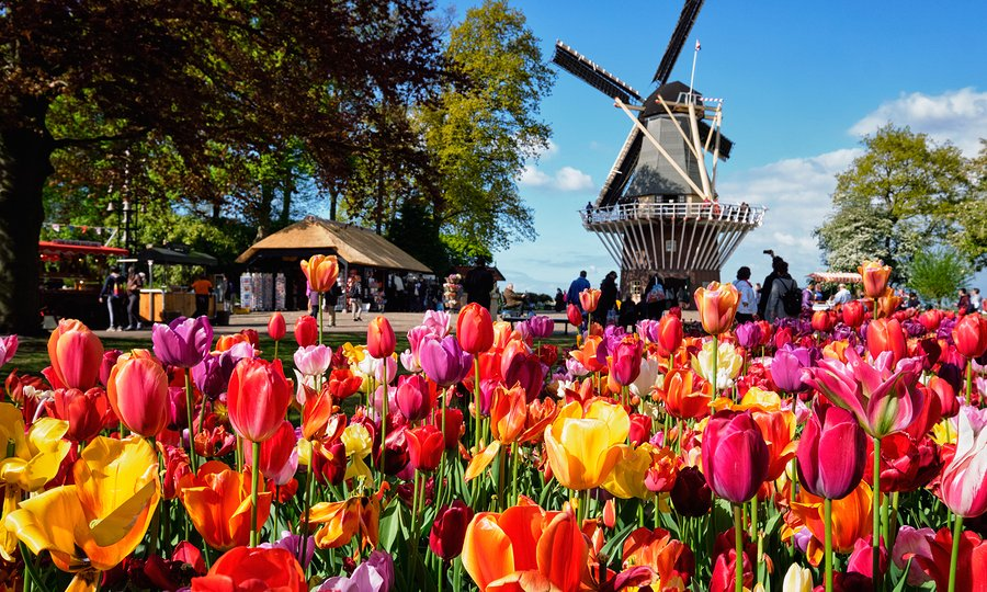 9 Day Netherlands Tour