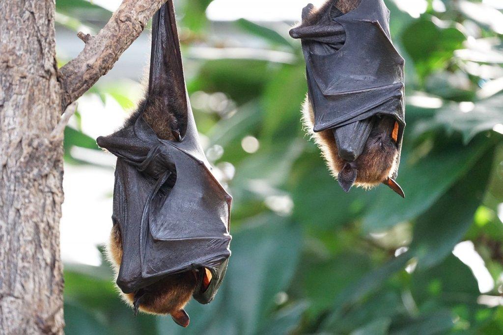Bat Walk Arnhem